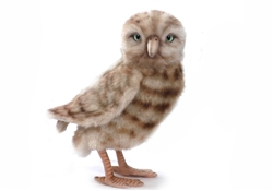 "Burrowing Owl 10""h"