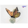 "Monarch Butterfly 5""l"