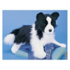Chase Border Collie