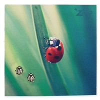 Zad Jewelry Ladybug Stud Earrings