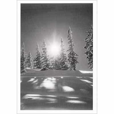 Sunburst in Aspen Greeting Card