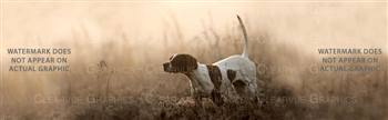 Pointer Morning Dog Rear Window Graphic