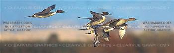 Northern Pintail Hunting Rear Window Graphic