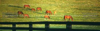 Grazing Horses Rear Window Graphic