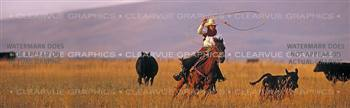 Ropin Horse Rear Window Graphic