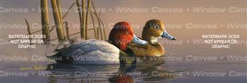 Redheads Birds & Ducks Rear Window Graphic