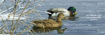 Winter Waters Birds & Ducks Rear Window Graphic