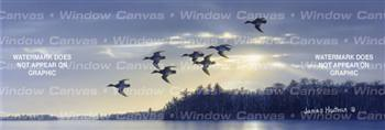 Blue Bills At Dawn Birds & Ducks Rear Window Graphic