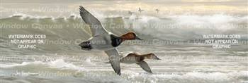 Canvasbacks I Birds & Ducks Rear Window Graphic