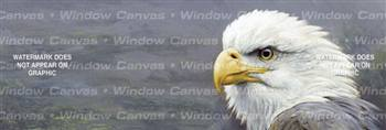 Eagle Portrait Birds & Ducks Rear Window Graphic