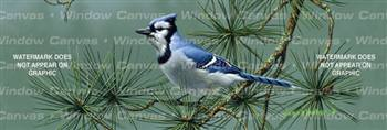Blue Jay Birds & Ducks Rear Window Graphic