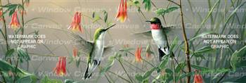 Hummin Bird Columbine Birds & Ducks Rear Window Graphic