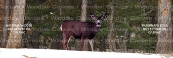 Winter Buck Deer Rear Window Graphic