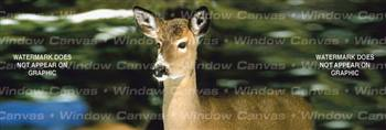Winter Doe Deer Rear Window Graphic
