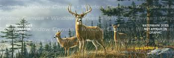 Autumn Whitetails Deer Rear Window Graphic