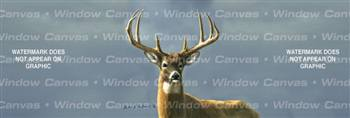 Autumn Whitetails I Deer Rear Window Graphic