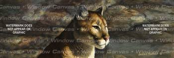 Cougar Portrait Feline Rear Window Graphic