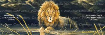 African Lion Feline Rear Window Graphic