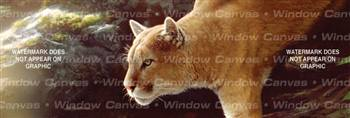 Focus I Feline Rear Window Graphic