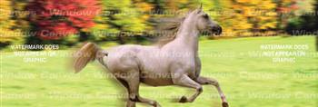 Running Free Horse Rear Window Graphic