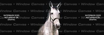 Bob's Horse Rear Window Graphic