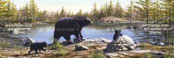 Black Bears Wildlife Rear Window Graphic