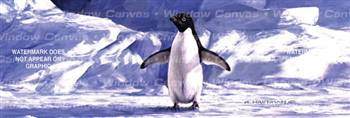 Penguin Wildlife Rear Window Graphic