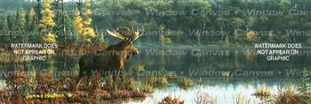 Black Bay Moose Wildlife Rear Window Graphic