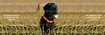 Black Lab Dog Rear Window Graphic