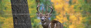 White Tail Wildlife Rear Window Graphic