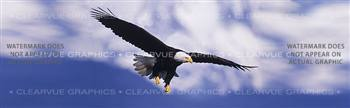 Eagle in Flight Wildlife Rear Window Graphic