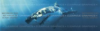 Great White Wildlife Rear Window Graphic