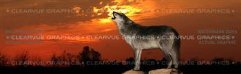Howling at Sunset Wildlife Rear Window Graphic