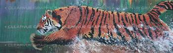Tiger Wildlife Rear Window Graphic