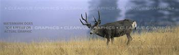 Buck Dream Wildlife Rear Window Graphic