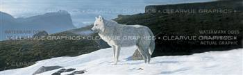 Artic Wolf Wildlife Rear Window Graphic