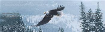 Free Flight Wildlife Rear Window Graphic