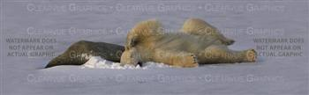 Bear Nap Wildlife Rear Window Graphic