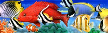 Coral Fish Wildlife Rear Window Graphic