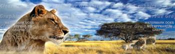 Lions Wildlife Rear Window Graphic