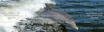 Dolphin Wildlife Rear Window Graphic