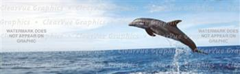 Dolphin Jumping Wildlife Rear Window Graphic