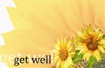 """Get Well"" : Sunflower (Pack of 50 enclosure cards)"
