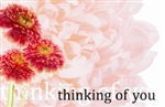"""Thinking of You"" Pink carnation (Pack of 50 enclosure cards)"