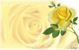 Yellow rose (Pack of 50 enclosure cards)