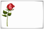 Single red rose with border (Pack of 50 enclosure cards)