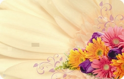 Gerbera mix (Pack of 50 enclosure cards)
