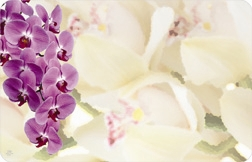 Orchid mix (Pack of 50 enclosure cards)