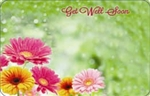 """Get well soon"" Green backrnd w/ gerbera (Pack of 50 enclosure cards)"