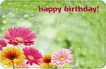 """Happy Birthday"" : Green bckgrnd w/ gerberas (Pack of 50 enclosure cards)"